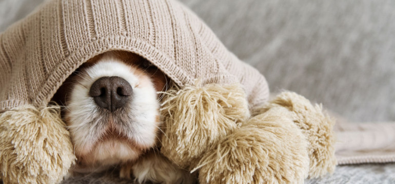 Does your dog need a sick day?
