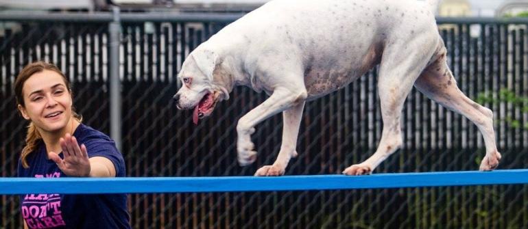Why Every Dog Needs Training